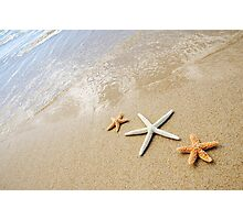 Three Sea Stars Photographic Print