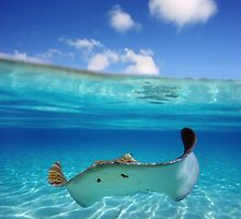 Stingray in Turquoise Water by printscapes