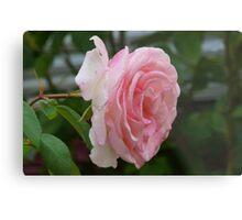 lovely pink rose Metal Print