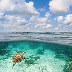 Over Under Shot, Green Sea Turtle by printscapes