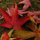 Hot Autumn Colors by Georgia Mizuleva