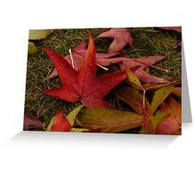 Hot Autumn Colors Greeting Card