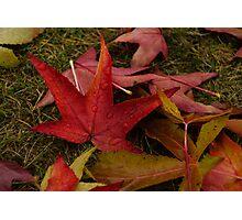 Hot Autumn Colors Photographic Print