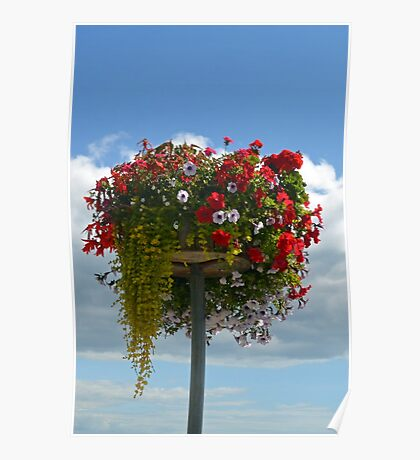 Floral Display At Lyme Poster