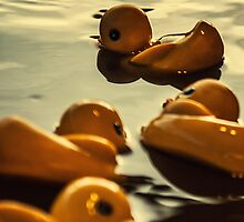 Ducks at the Carnival by nickbphoto