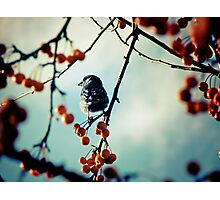 Bird Beauty Photographic Print
