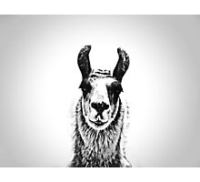 Black and White Llama Photographic Print