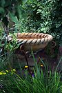 Rope Edged Bird Bath by Sandra Foster