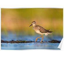 Lesser Yellowlegs at Sunrise... Poster