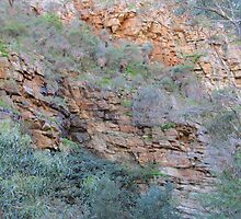 Looking Up! Morialta Gorge, Cons. Park, Adelaide, Sth. Aust. by Rita Blom