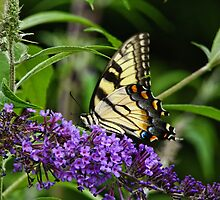 Butterfly on Bush by PineSinger