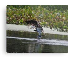 Osprey's Successful Fishing Trip Metal Print