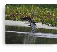 Osprey's Successful Fishing Trip Canvas Print
