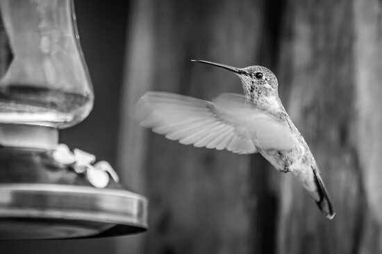 Humming in Monotone by Randy Turnbow
