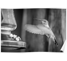 Humming in Monotone Poster
