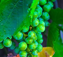 Green on the Vine by Barbara  Brown
