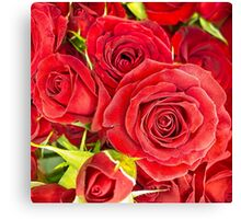 Red roses for love and romance Canvas Print