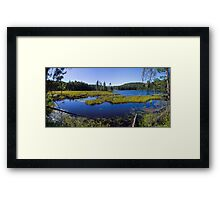 Mosquito Hatchery Framed Print