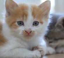 cat  by csajos