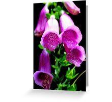 Flower portrait Greeting Card