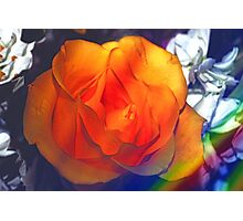 Gold rose 2 Photographic Print