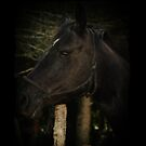 Midnight Beauty-Black Stallion Horse by Val  Brackenridge