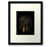 Midnight Beauty-Black Stallion Horse Framed Print