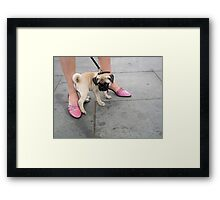 Cute little pug and pink woman shoes, New York City street scene Framed Print