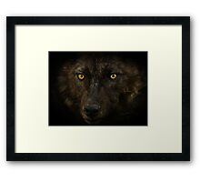 Midnights Gaze - Black Wolf Wild Animal Wildlife Framed Print
