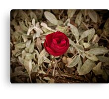Autumn red rose, vintage Canvas Print