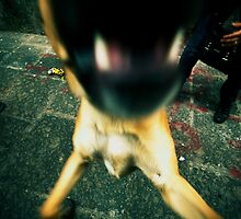 Barking dog mouth in cross processing by Reinvention
