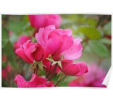 Flower Beauty - 8 Poster