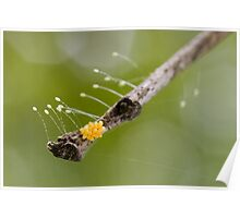 Insect Eggs Poster