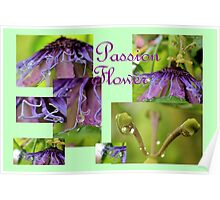 Passion Flower Collage Poster