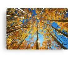 Aspen Tree Canopy Canvas Print