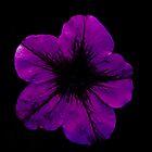 Purple Geranium by Scott Lyons