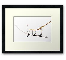 Walking Stick Insect Framed Print