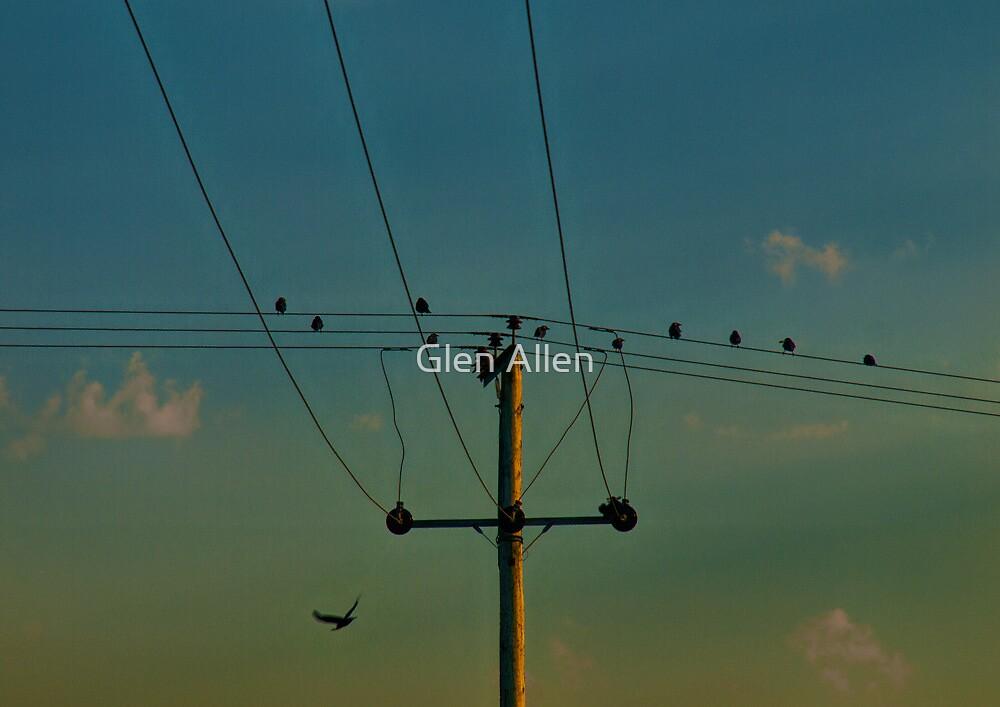 Birds on a Wire in the Sunset by Glen Allen