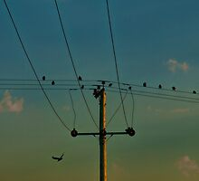 Birds on a Wire in the Sunset by Glen Allen