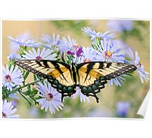 Eastern Tiger Swallowtail on Wildflowers Poster
