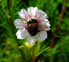 The Humble Bumble by Susan Ann Dowling
