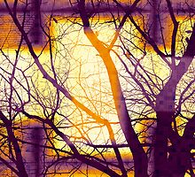 Harmonious Colors - Violet Yellow Orange by SRowe Art