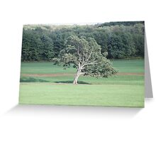 Lonely slanted tree Greeting Card