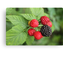 Wild Rasberries Canvas Print