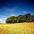 North Yorkshire Cornfield & Copse 3 by eatsleepdesign
