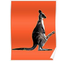AUSSIE ROO Poster