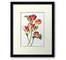 """Flower Garden - Freesias"" Framed Print"