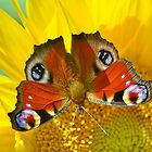 Peacock on Sunflower by relayer51