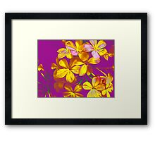 Colours Flowers Framed Print