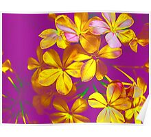 Colours Flowers Poster